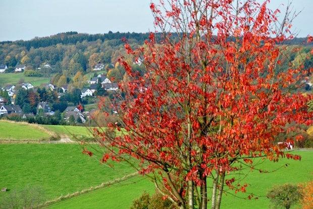 Photo of Versicherungstipp: Achtung, Herbst! Das sind die größten Tücken für Autofahrer