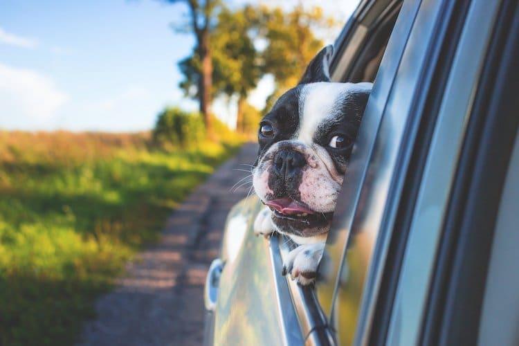 Photo of ADAC präsentiert – die passenden Autos für Hundebesitzer
