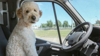 Photo of Hund im Auto: Wie sichert man seinen vierbeinigen Gefährten?